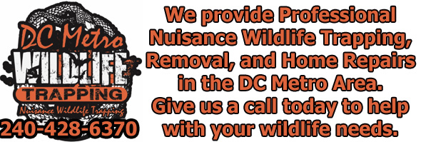 College Park Wildlife Removal, Pest Animal Control MD - DC