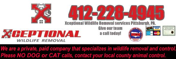 Aliquippa Wildlife Removal, Pest Animal Control PA
