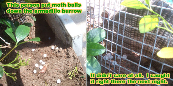 Do moth balls really keep snakes away
