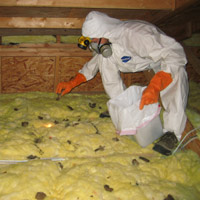 Attic Restoration Cleanup Of Wildlife Animal Waste And