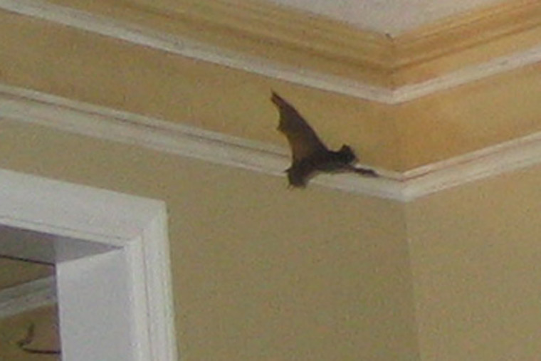 Bats To Get Inside The Living Areas
