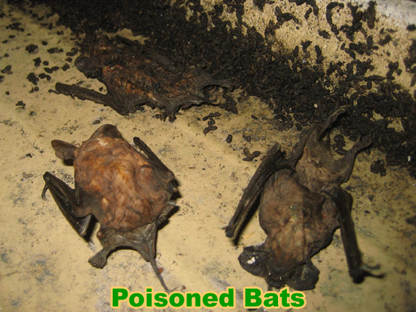 How To Kill A Bat