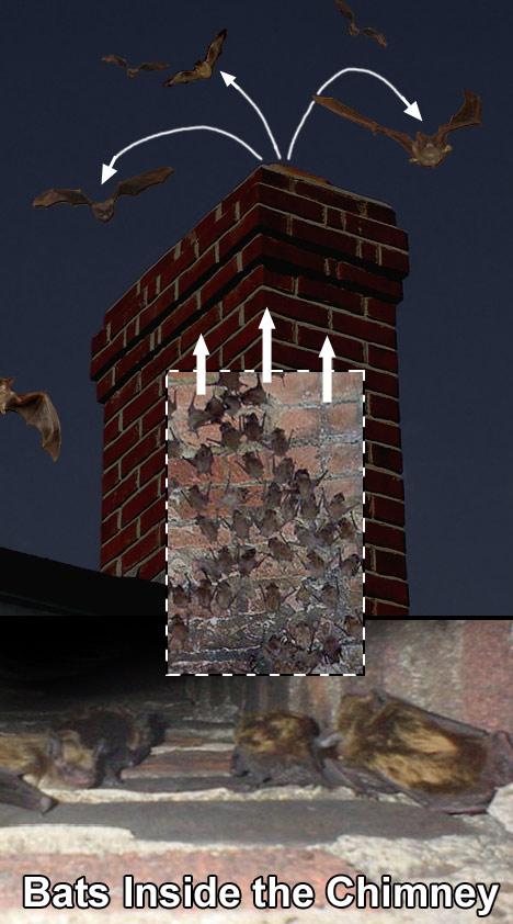 Chimney Bats Best Image Wallpaper
