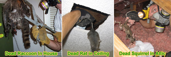 House Odors a bad smell in the house - odor in the home - is it a dead rodent