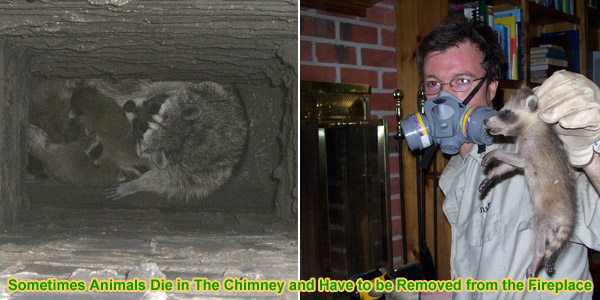 Dead Animal In Chimney - Bad Smell and Odor in Fireplace