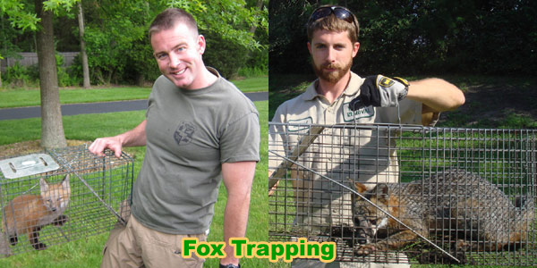 How to Kill a Fox - Poison, Shooting, Snare Traps
