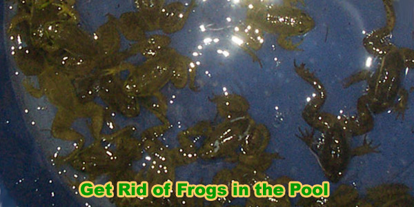 How To Get Rid Of Frogs In Backyard how to get rid of frogs in your pool