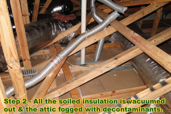 If everything else is in working condition it is time to turn your attention to your insulation. Because most homeowners donu0027t know they have a pest ... & Attic Insulation Replacement - Fort Lauderdale Boca Raton Miami
