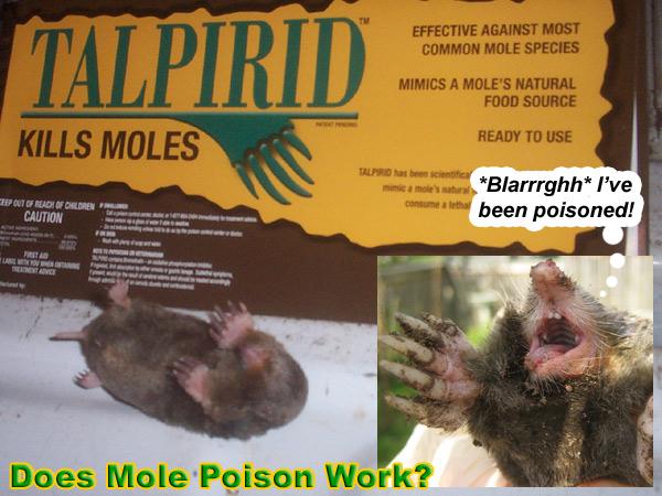 Mole Poison to Kill Moles in the Yard