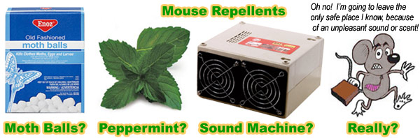 Mouse repellent - mothballs, peppermint, natural home remedy