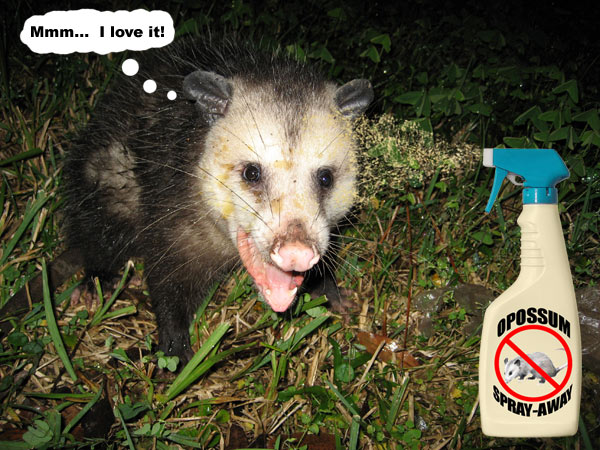 Possum Repellent Keep Away Opossums