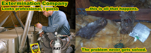 Natural Pest Control For Rats Commercial Rat Pest