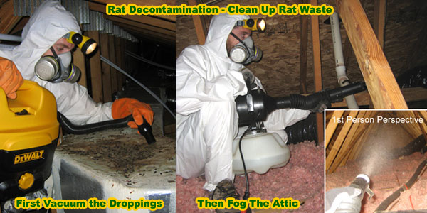 How To Get Rid Of Rats In House Building Attic Without