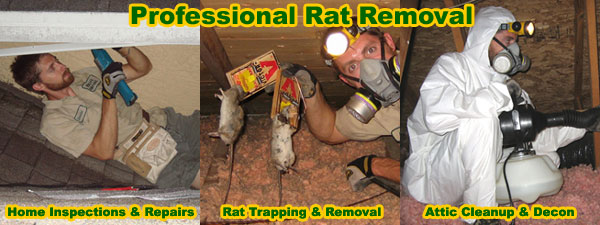 Okay then, as stated at the top, the only real rat repellent is to find out how they are getting into the house, and sealing those entry points shut.