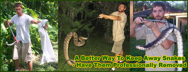 How to Get Rid of Snakes Imagine walking through your backyard to your favorite sitting area only to be greeted by slithering snakes.