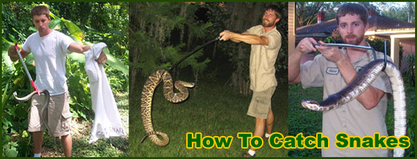 Snake Removal And Control