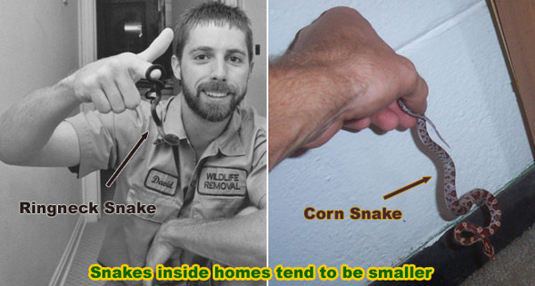 How To Catch Snakes - In your House, Garden, or Yard