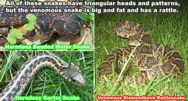 How can you tell what kind of snake you found, and if it is