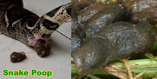 Photographs of Snake Poop - Images of Feces and Droppings