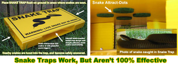 Eight Ways To Get Rid Of Snakes