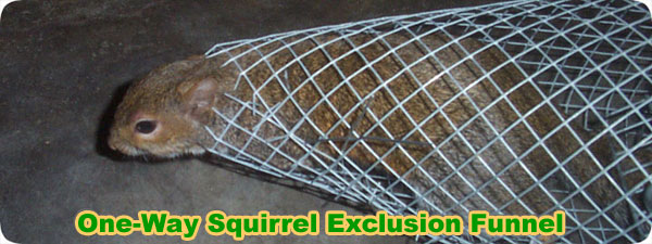 One Way Door Exclusion Funnel For Squirrels