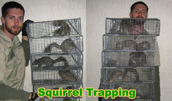 How To Catch Squirrels