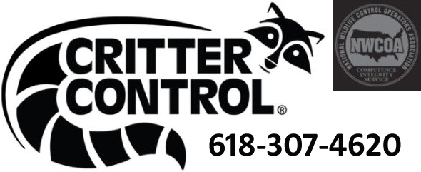 Belleville Wildlife Removal Pest Animal Control Il
