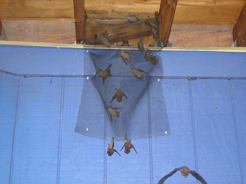 Instructions On How to Get Bats Out of Buildings on blinds door, privacy door, driver door, welcome door,